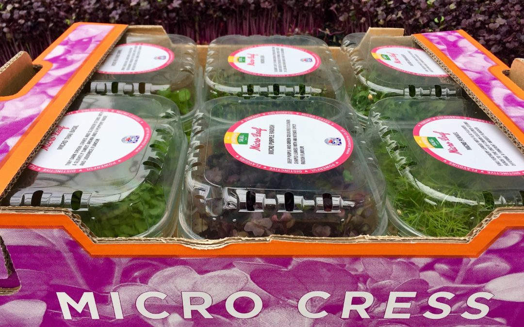 New Micro Leaf Catering Box