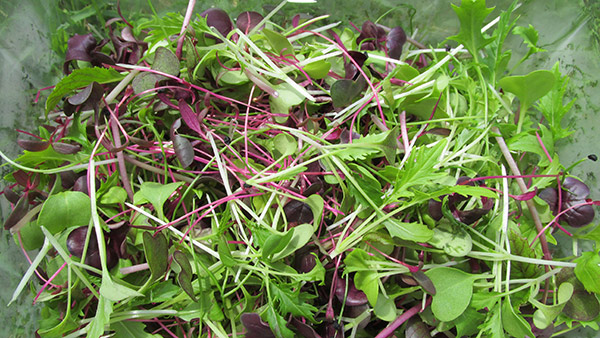 Dawndew Salad introduces 'Gourmet' Garnish…..